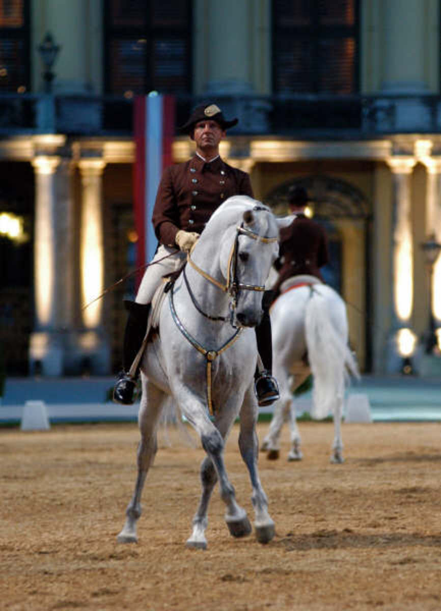 Lipizzan stallion and rider performing