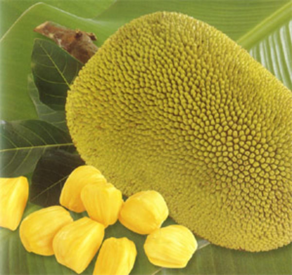 Jackfruit with numerous health benefits