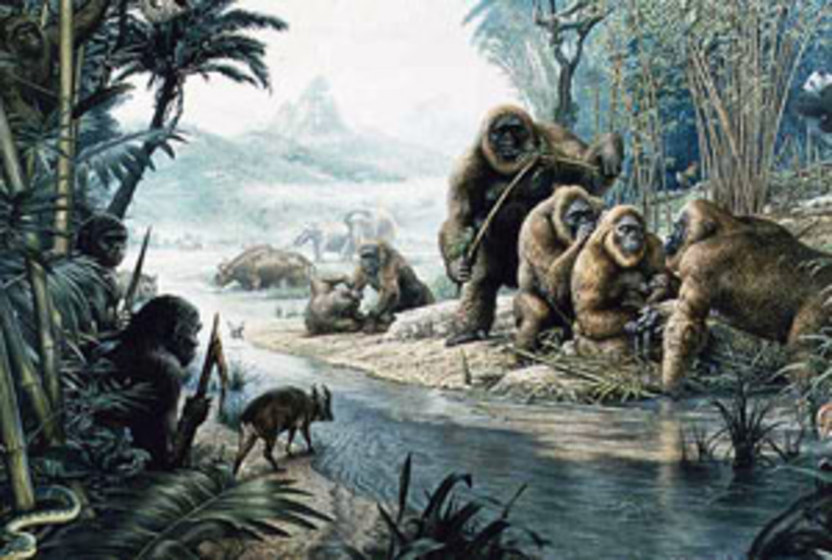An artists depiction of when a couple of early humans encounter a group of Gigantopithecus in the Asian jungle.