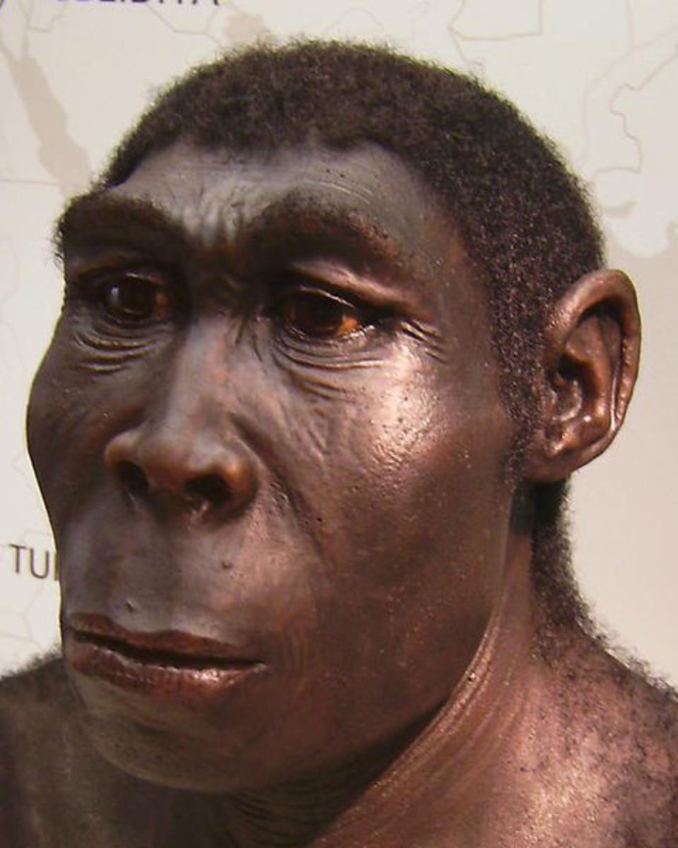 Homo erectus was the first hominid to leave Africa. They discovered and colonised prime and virgin Asian territory.