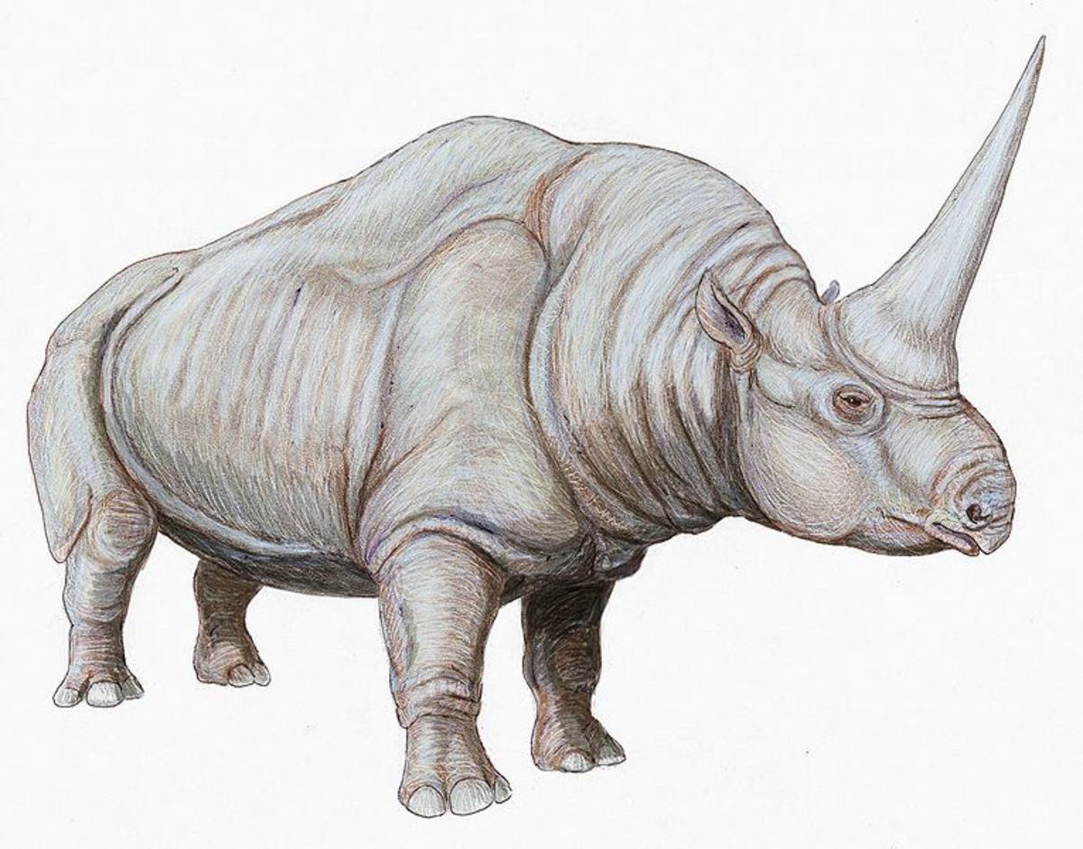 Elasmotherium possessed a horn unlike any other rhino, it grew out of the top of skull, rather than the tip of the nose.