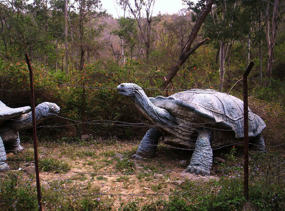 A reconstruction of the largest tortoise of all time, Colossochelys- which literally means 'colossal shell'.