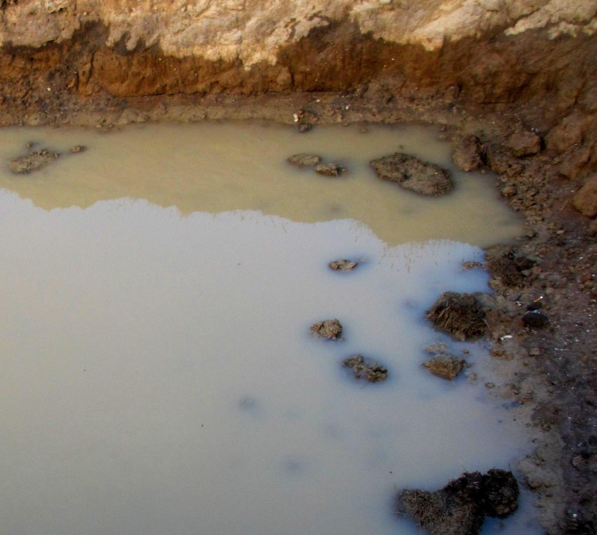 A large puddle of muddy water, illustrating what many people think of when they hear that life arose from a primordial soup of simple chemicals/compounds.