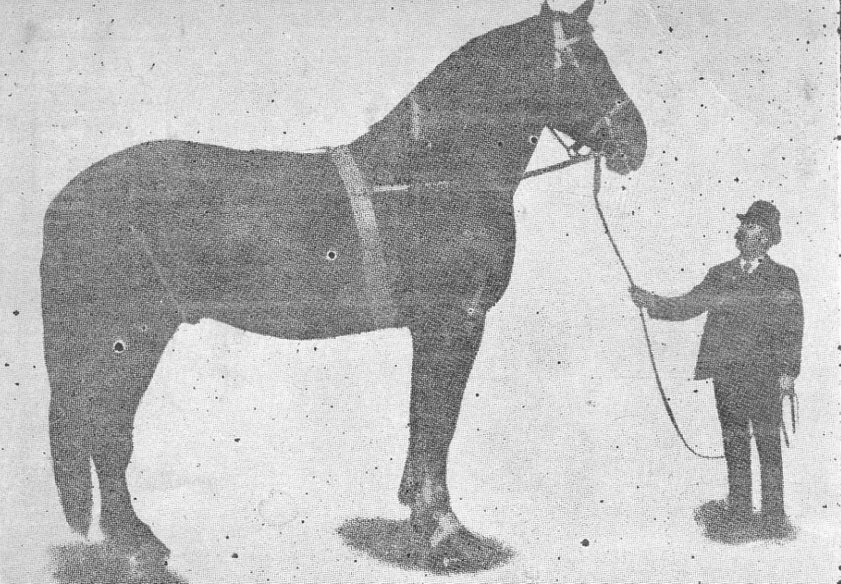 Huge Horses