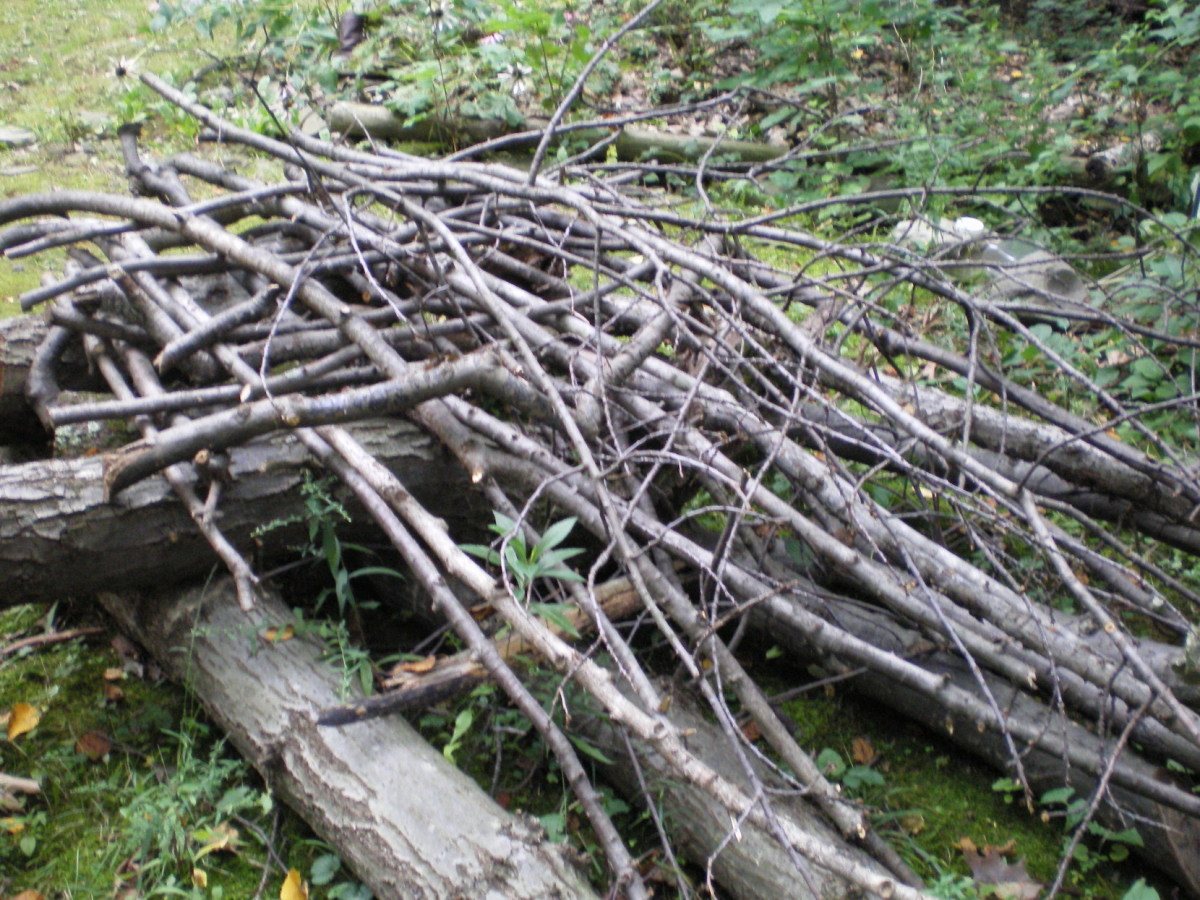 If you build it, they will come!  Making a brush pile for your backyard birds is a fun, easy project.