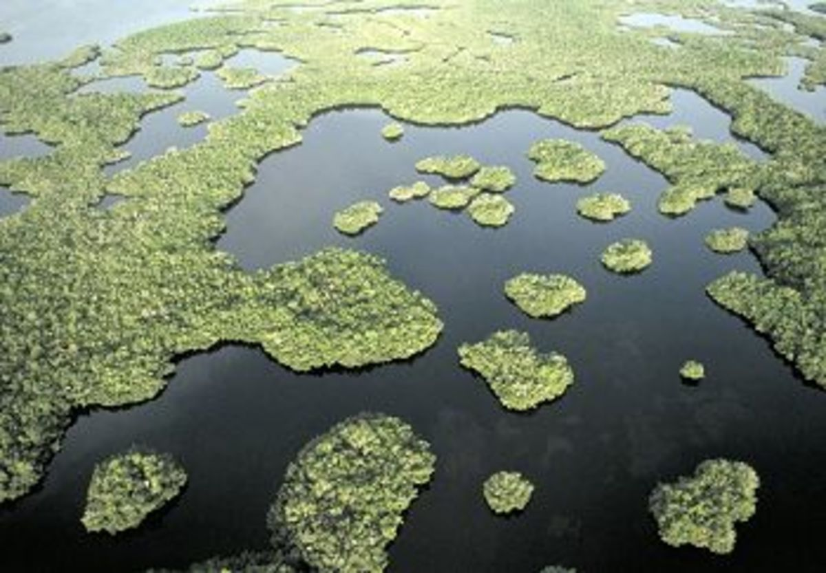 The Everglades is a river over 60 miles wide.  The river is full of islands, forest and swamps and home to dozens of bird species.