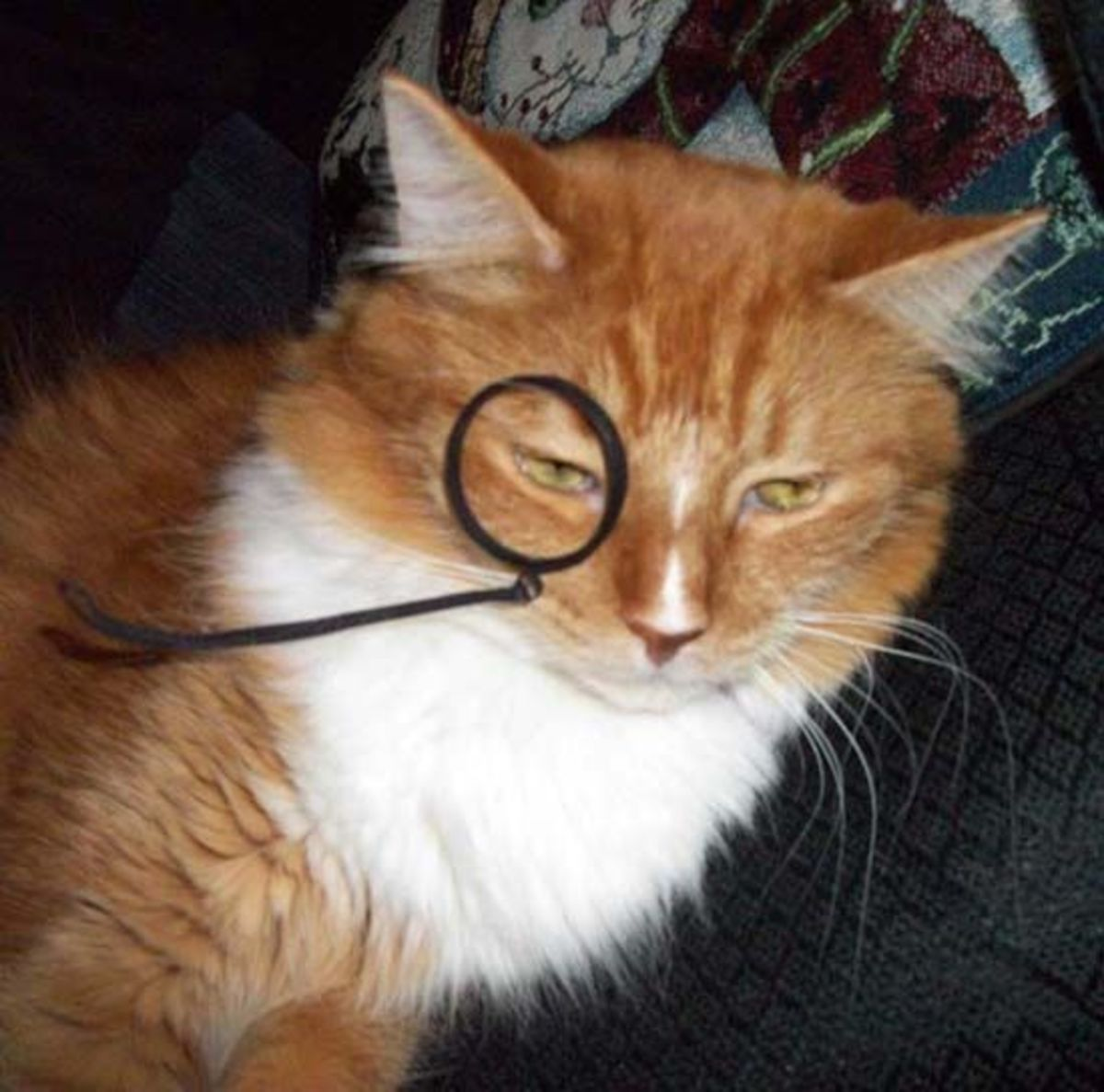 Bored and slightly annoyed marmalade kitty in costume monocle