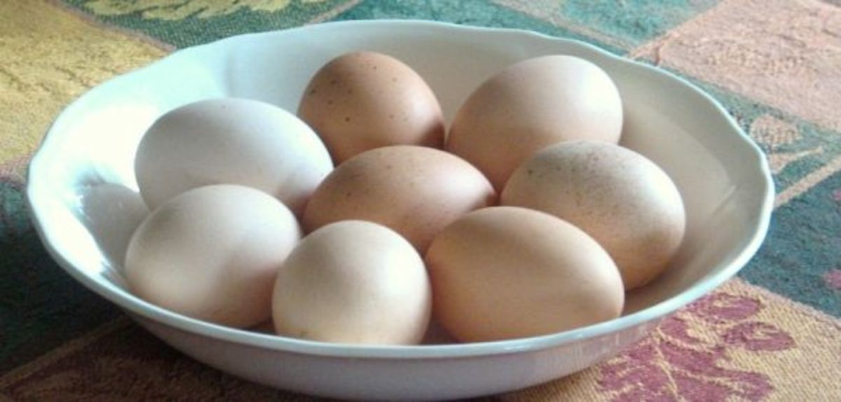Backyard chickens eggs in serene colors