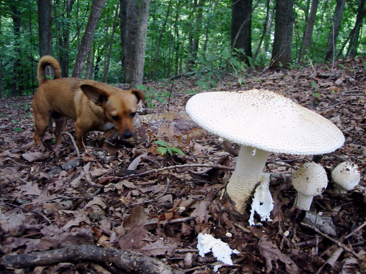 All mushrooms and fungus are toxic