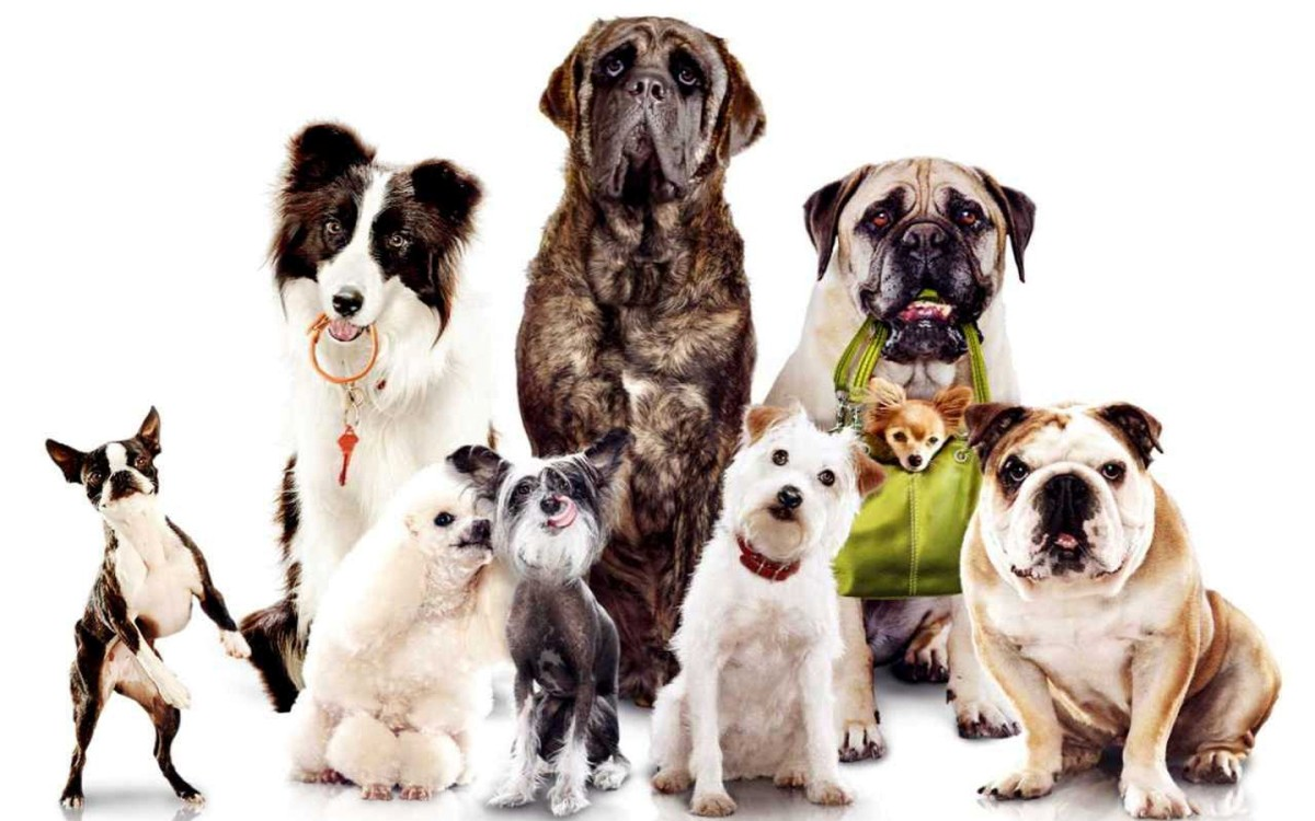 Take great care with what your dog eats, it may be toxic. Updated and indexed guide.