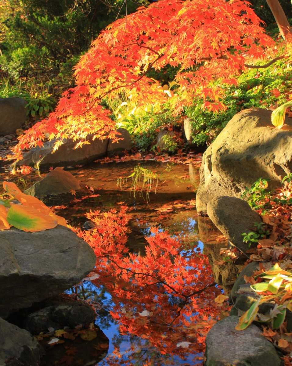Best Fall Leaf Viewing and Farmers Markets in Illinois | HubPages