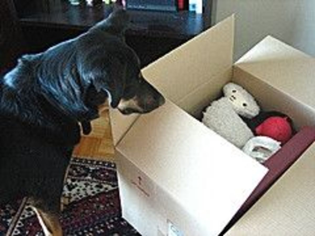 Dog with box of dog toys.