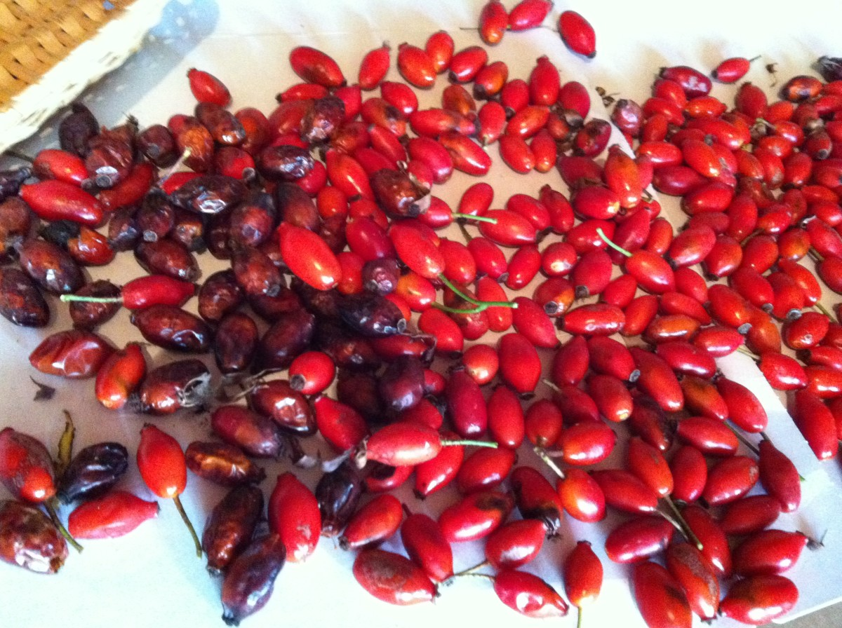 Drying rose hips (about a week in a dry, sun free place)