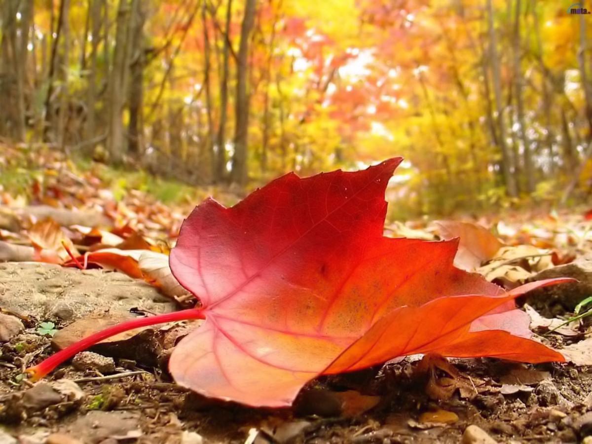 autumn breese-poem