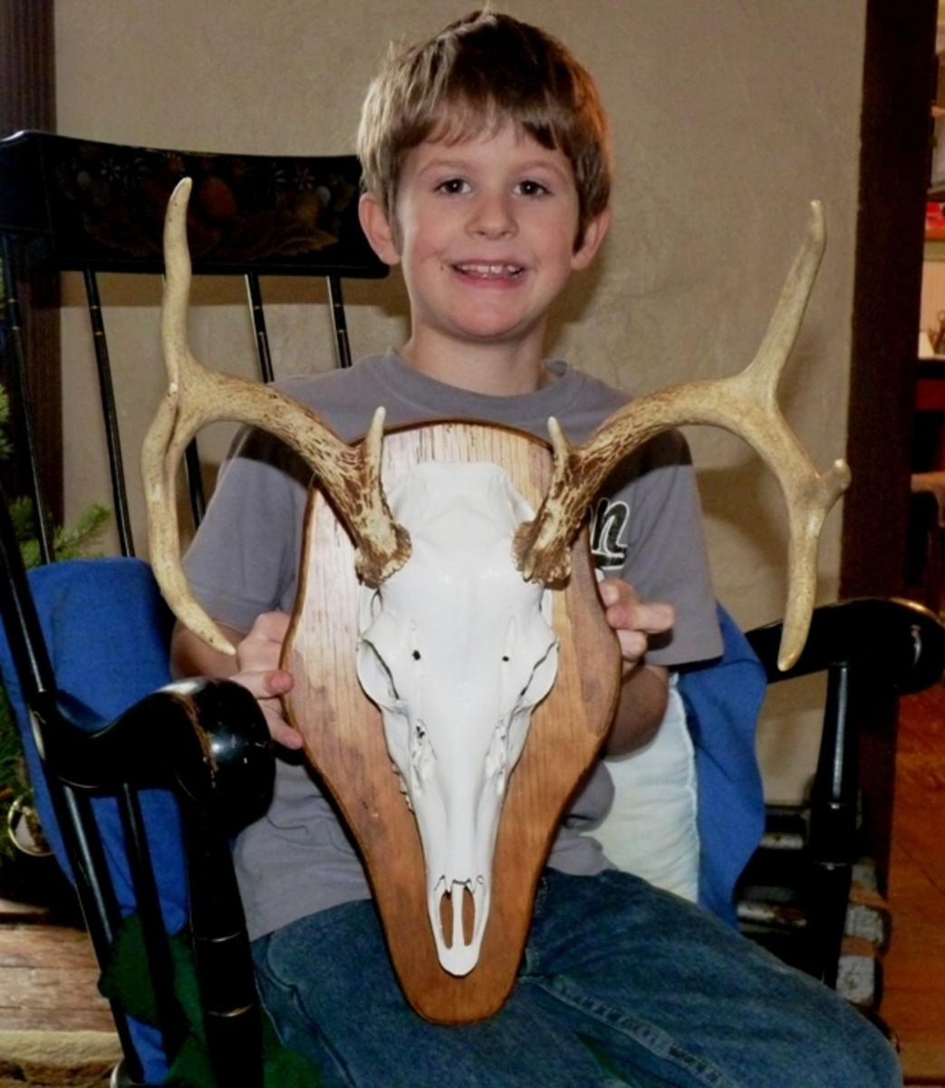 Helped the neighbor kid mount his grandpa's deer skull.