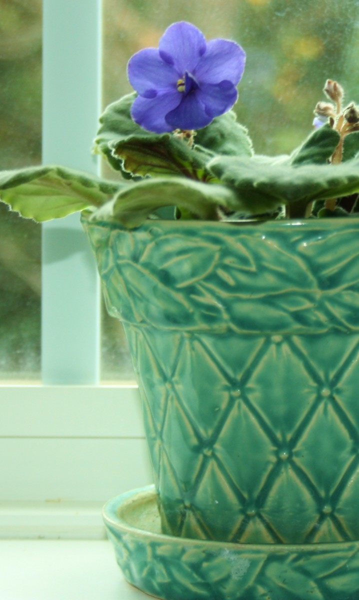 A vintage McCoy flower pot used as a cachepot.