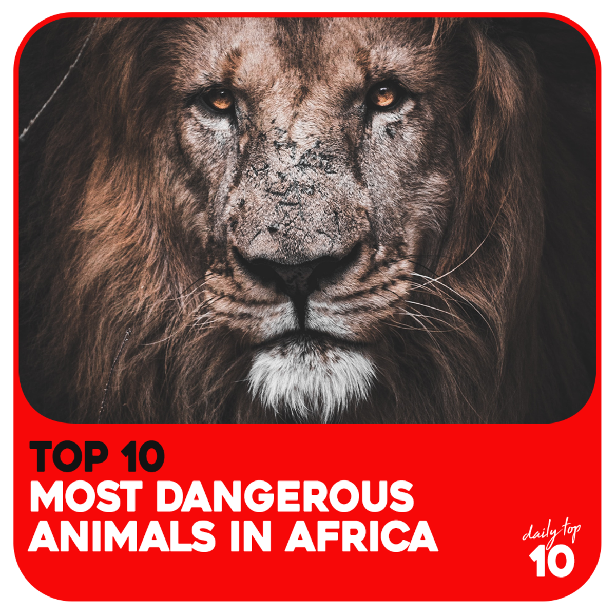 Top 10 Most Dangerous Animals in Africa You Surely Don't Want to Meet in the Wild (With Pictures)