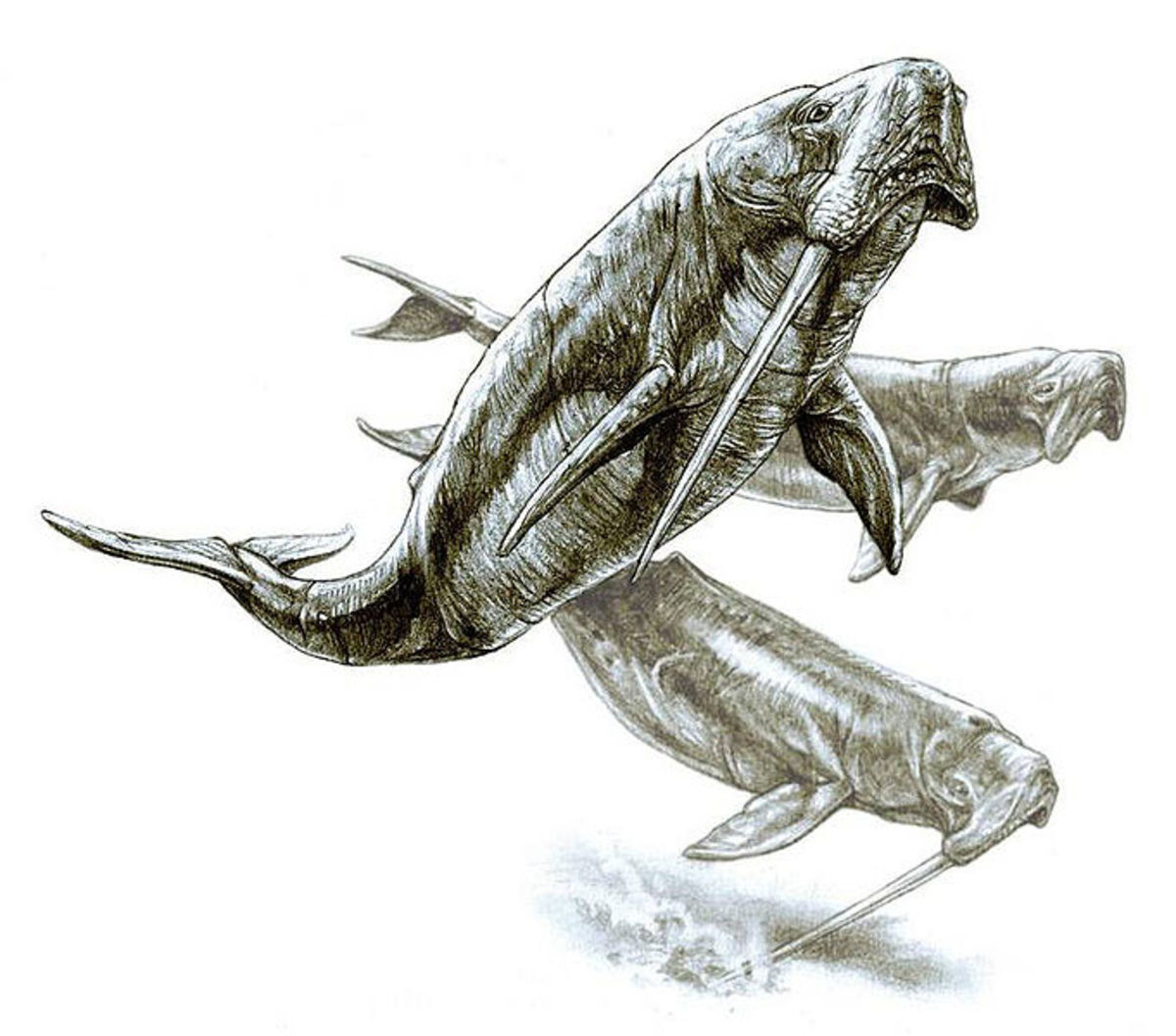 Odobenocetops were a favourite prey of megalodon. Dense beds of kelp offered some protection, as the predators were wary of penetrating the fronds.