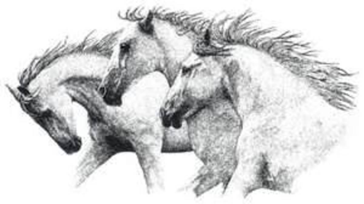 Horse Rubber Stamp Designs