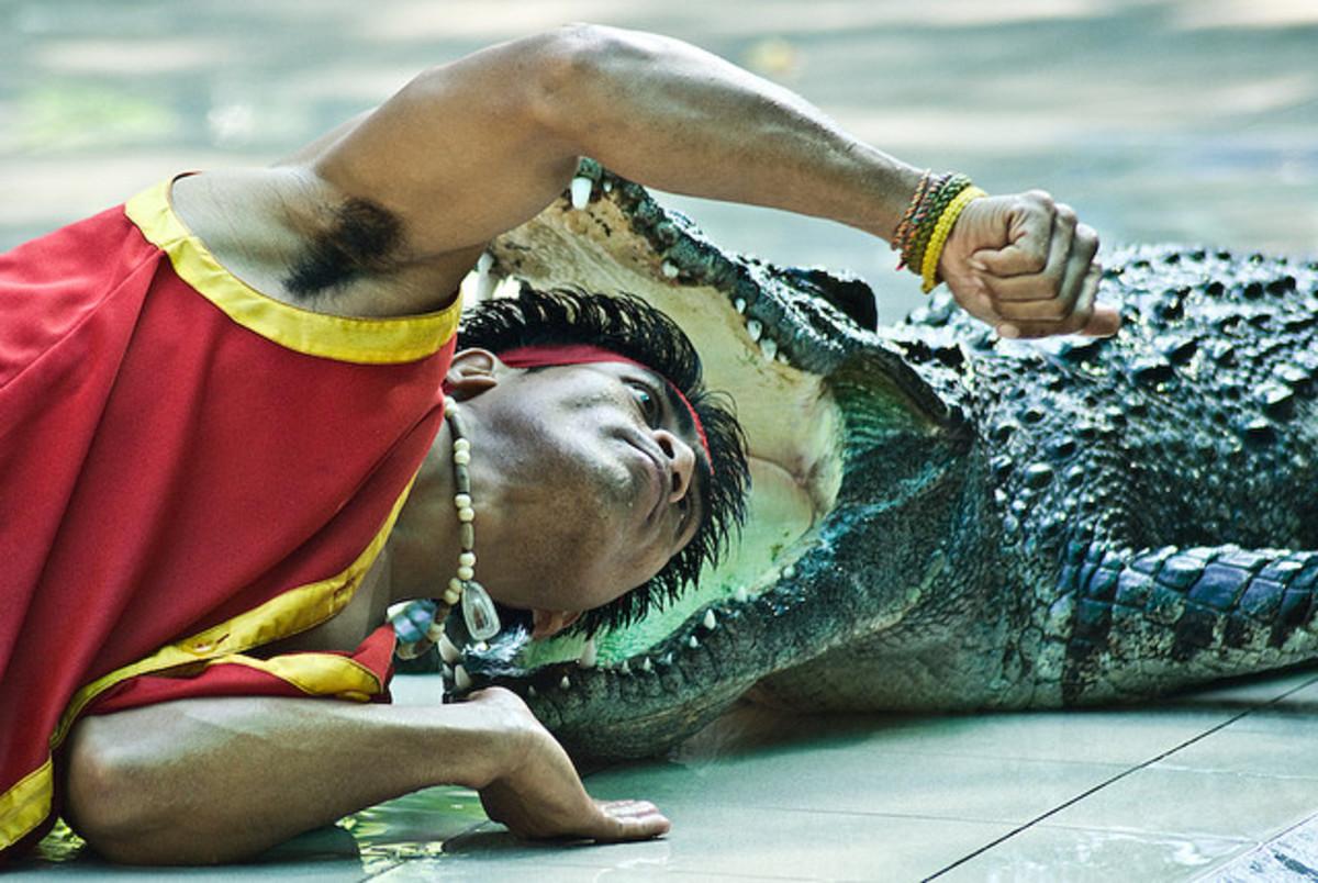 Don't Lose Your Head Over Alligator Dreams