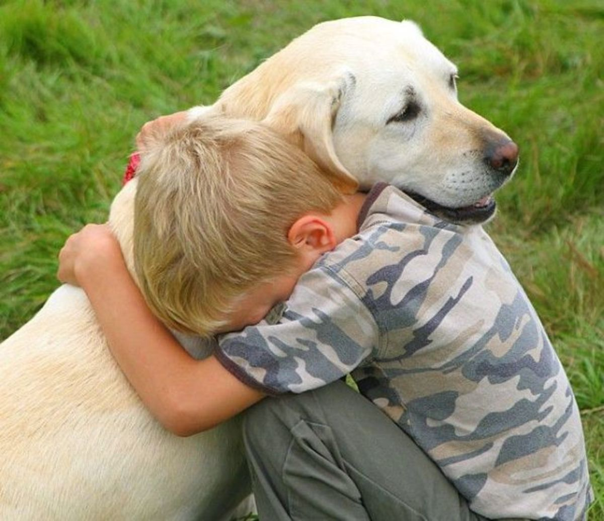 How to Develop Empathy in Children through Human-Animal Relationship