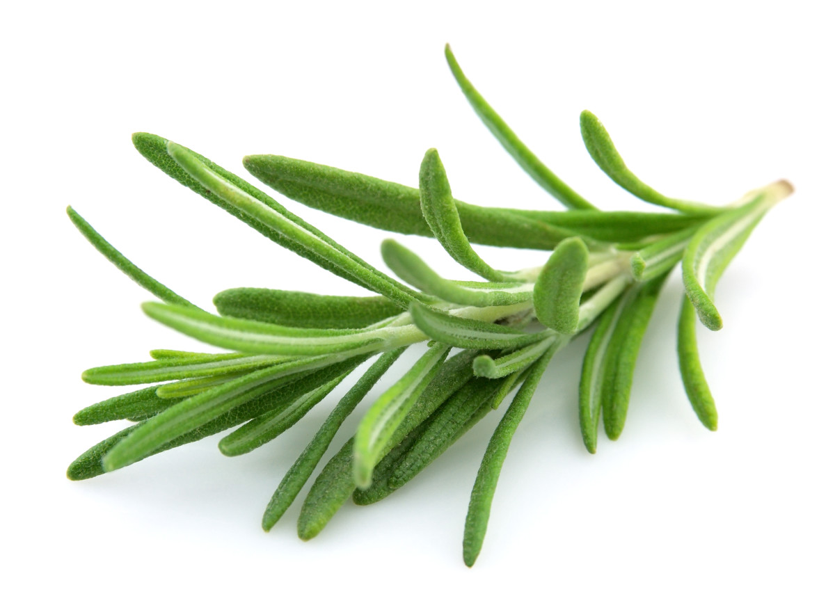 Rosemary is a herb which can be used to scent your used cooking oil.