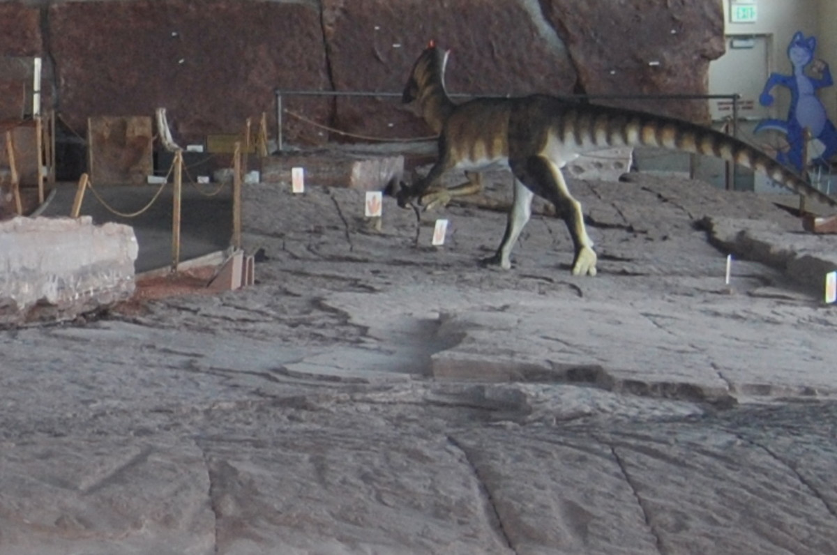 The inside of the dinosaur museum showing a long line of dinosaur tracks.