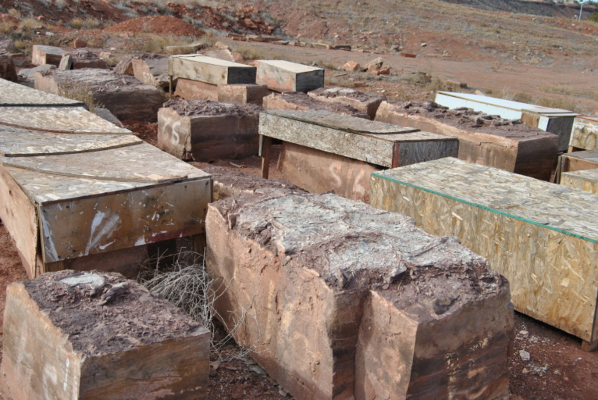Slabs from the road cut above that are waiting to be documented and investigated.