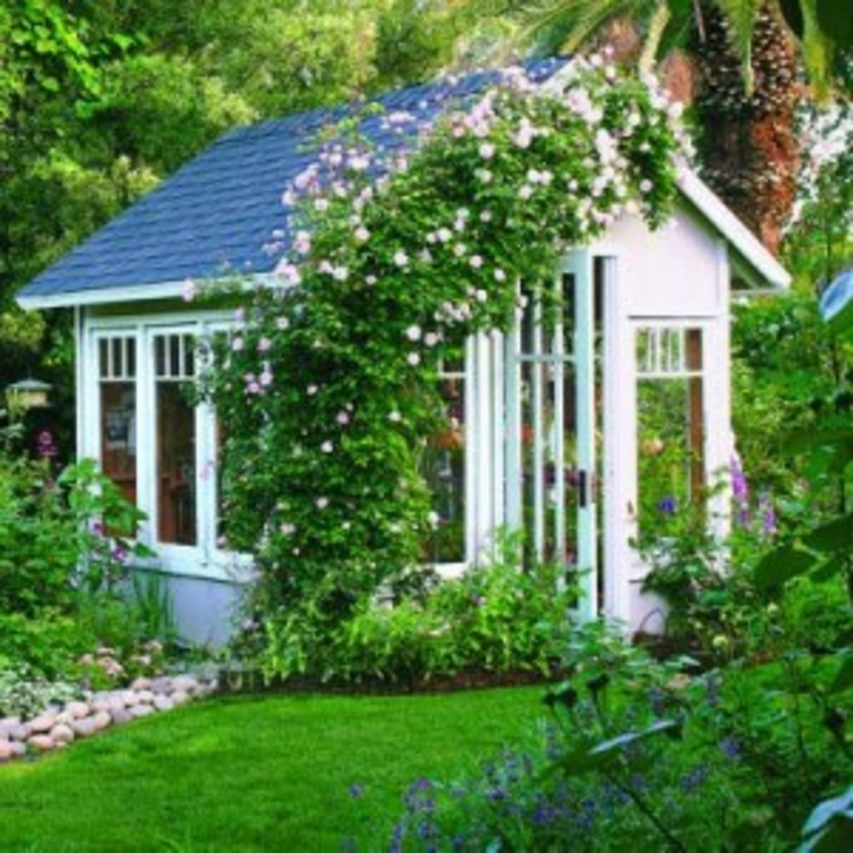 Beautiful Garden Shed with glass windows doors and climbing rose