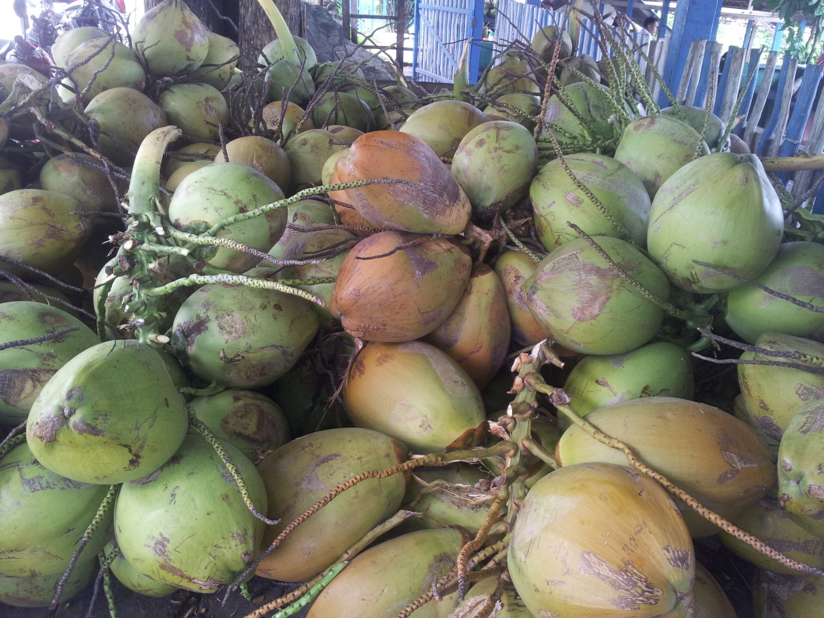 Young Coconuts on Sale for 50 Cents