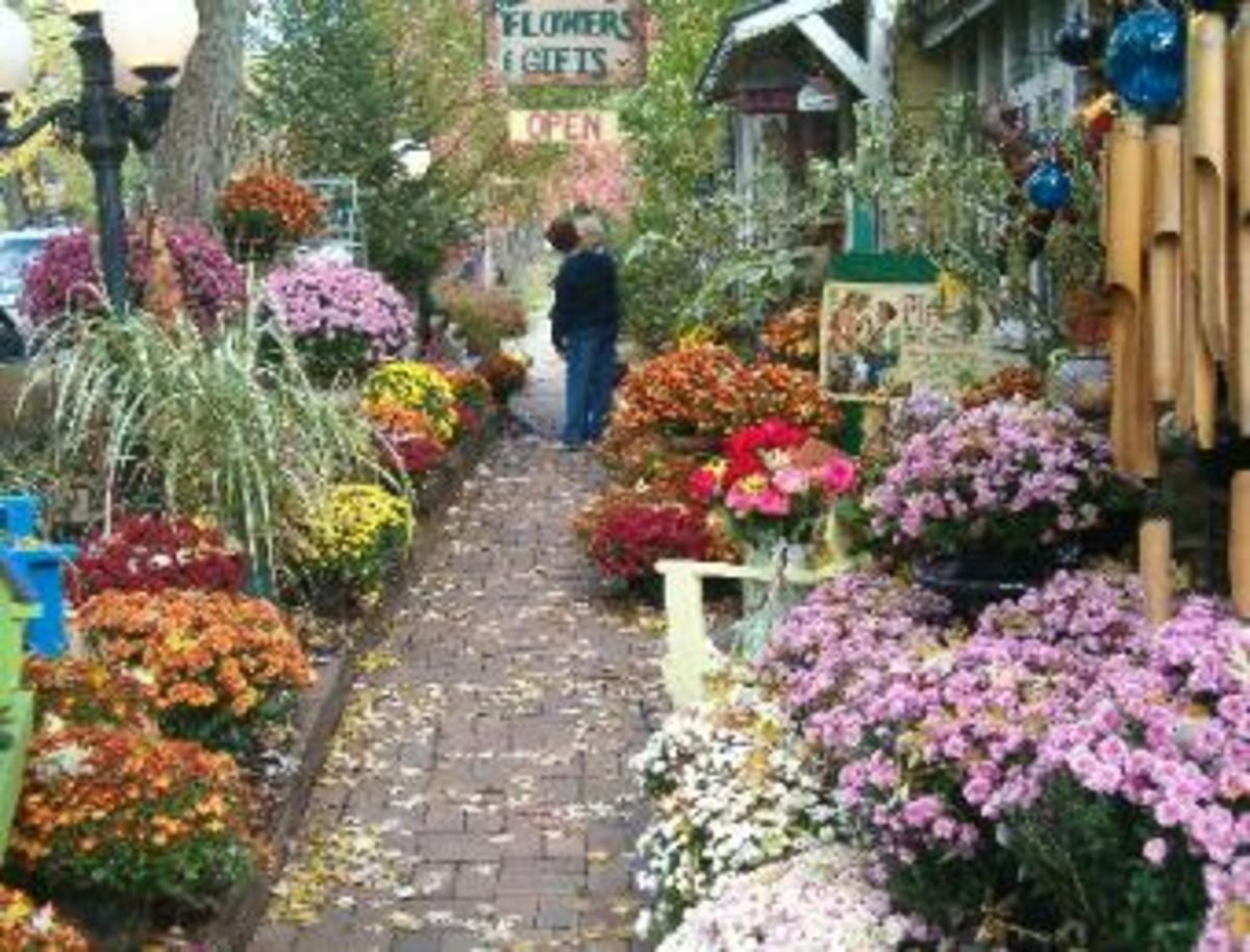 The Nashville shops line their walkways with beautiful flowers during the fall season.