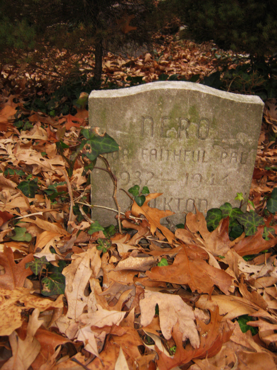 pet-cemetery-a-real-life-tale-of-a-neglected-animal-graveyard