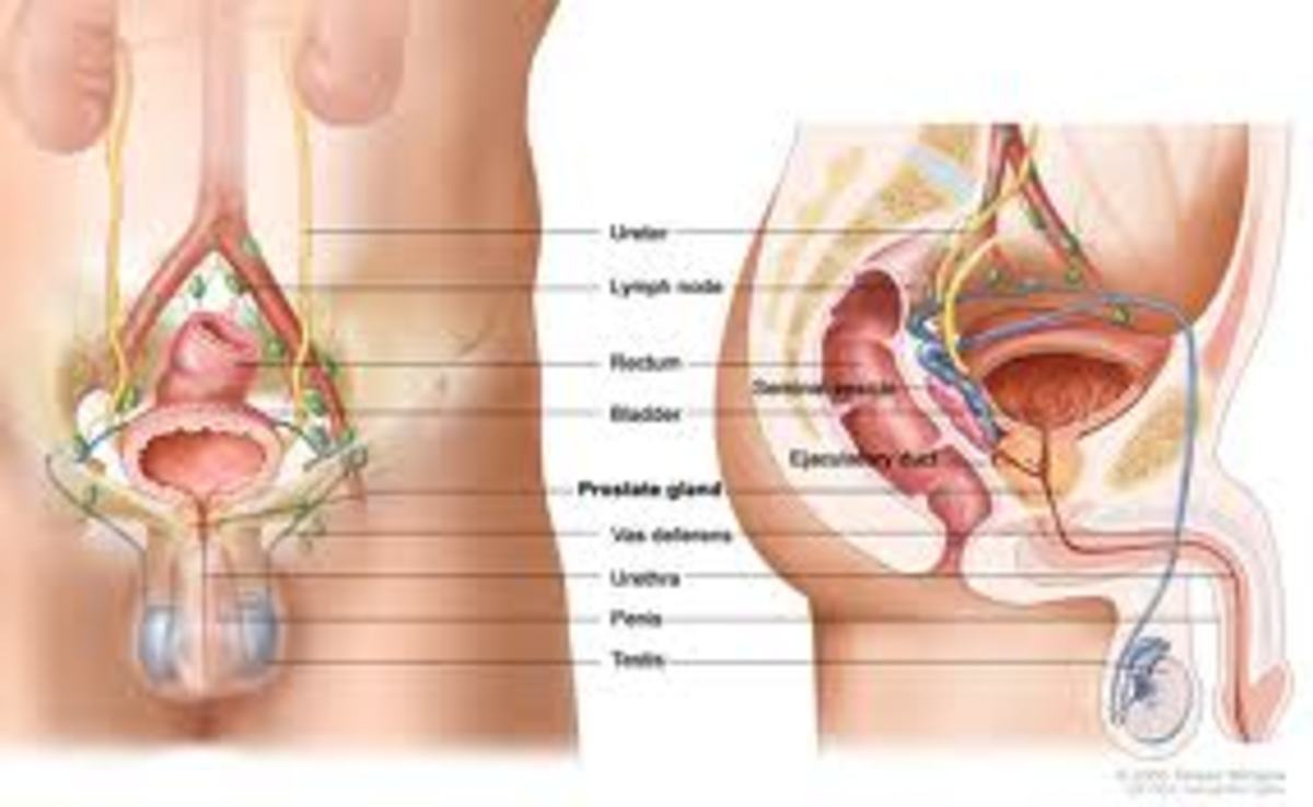 Great herbal supplements for dealing with prostate cancer