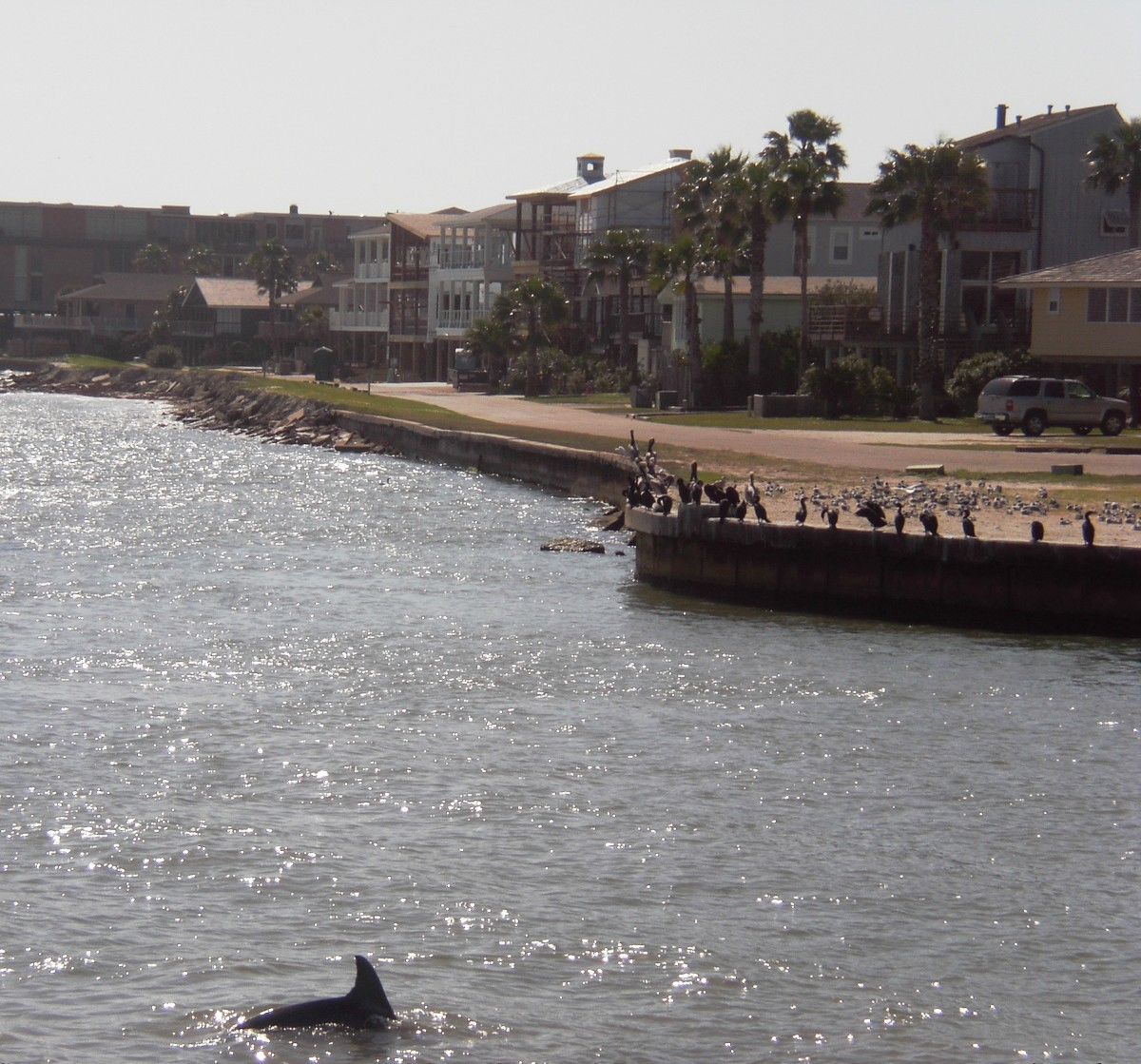 Dolphin watching in Port Aransas. Texas