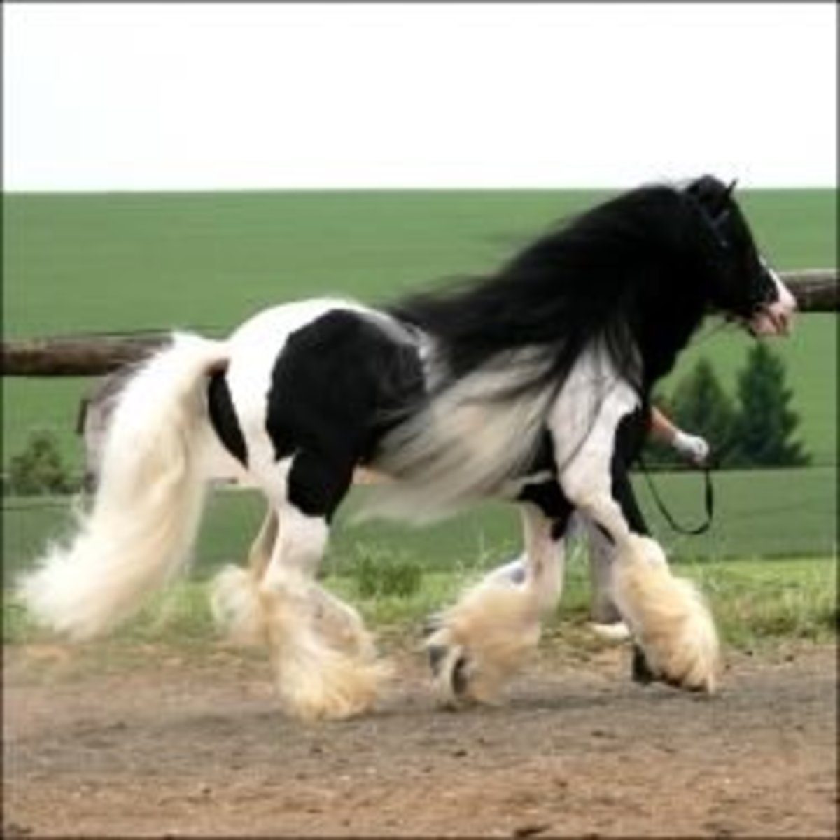 I Love Black Friesians and Gypsy Vanners - The Horses of Fairy Tales