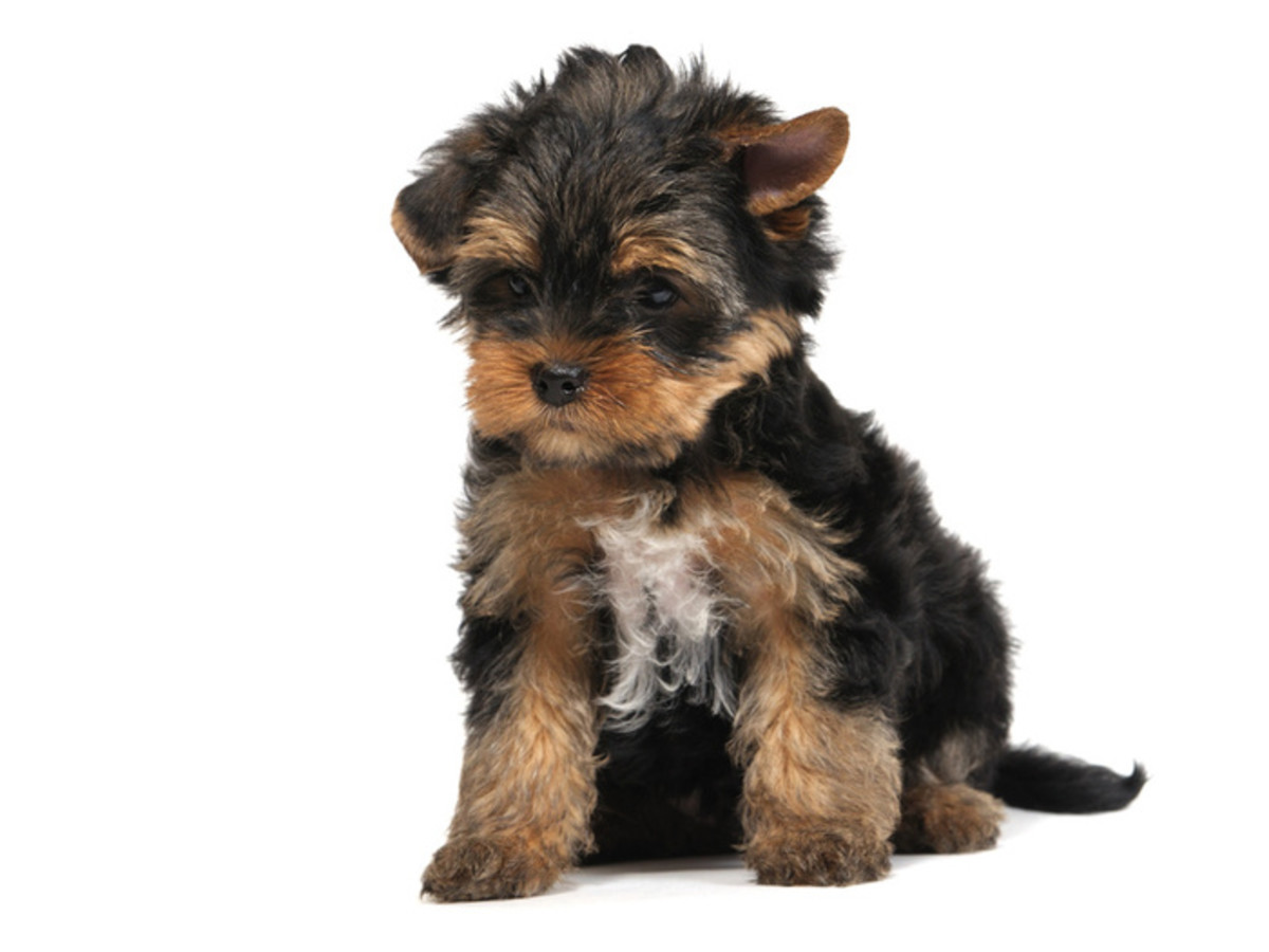 Top 10 Best Dog Breeds