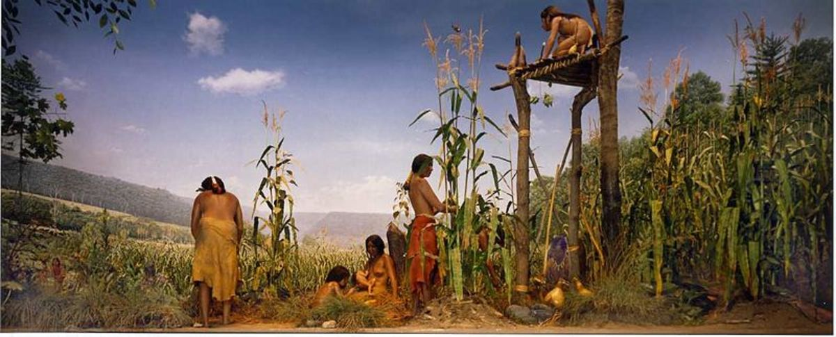 Photograph of a diorama in the NY State Museum that depicts an Iroquois family tending their three sisters garden of beans, corn and squash.