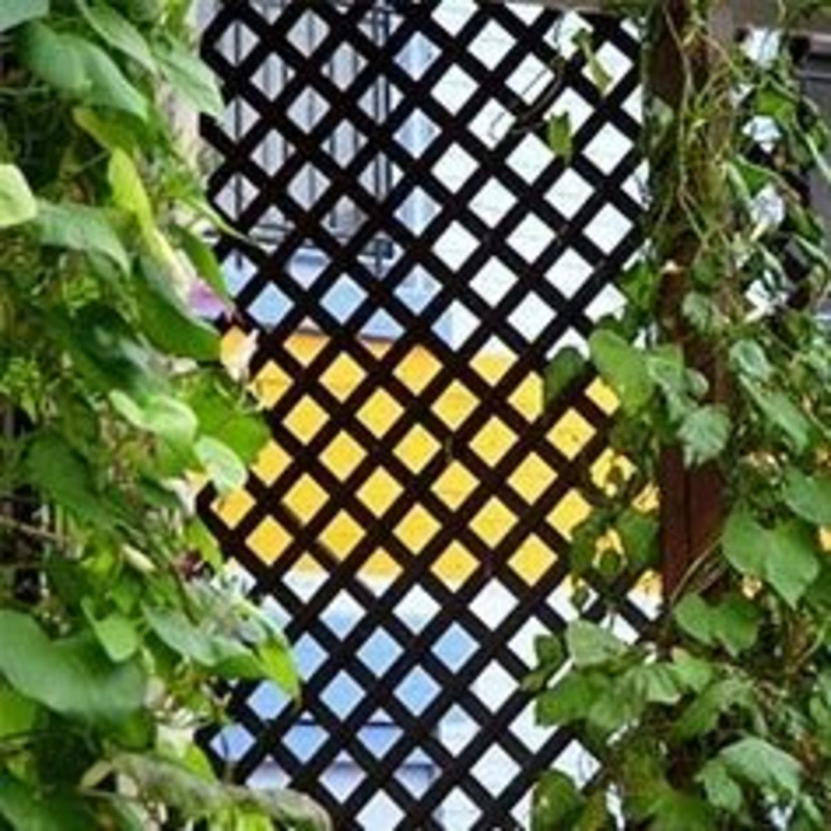 garden lattice screen with plants