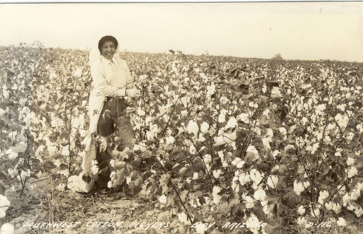 Growing cotton requires a hot sunny climate, lots of water and pesticides