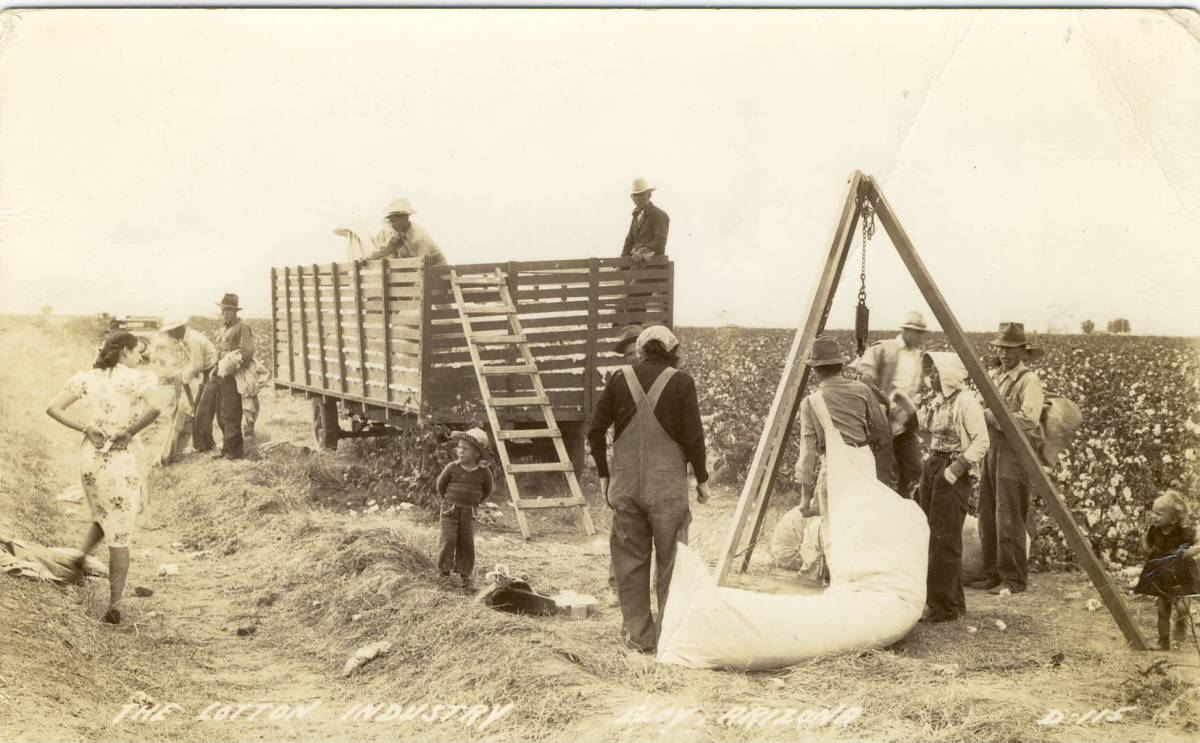 Sacks were weighed, credited to the picker and loaded into wagons for ginning.
