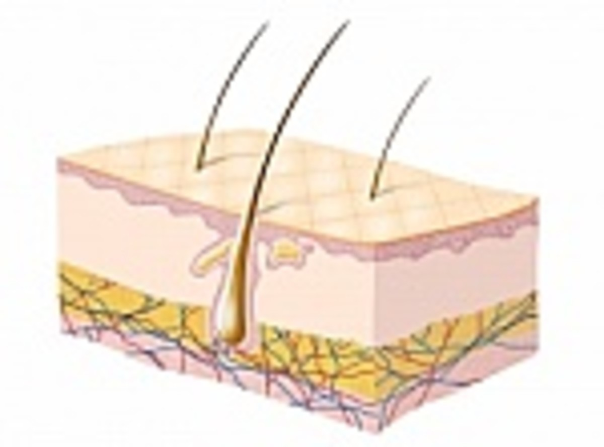 The skin being the largest organ in our bodies. Makes it that much easier for a topical pain cream for example, to reach the site of pain that is experienced. And again with rarely any side-effects as compared to prescription pills.
