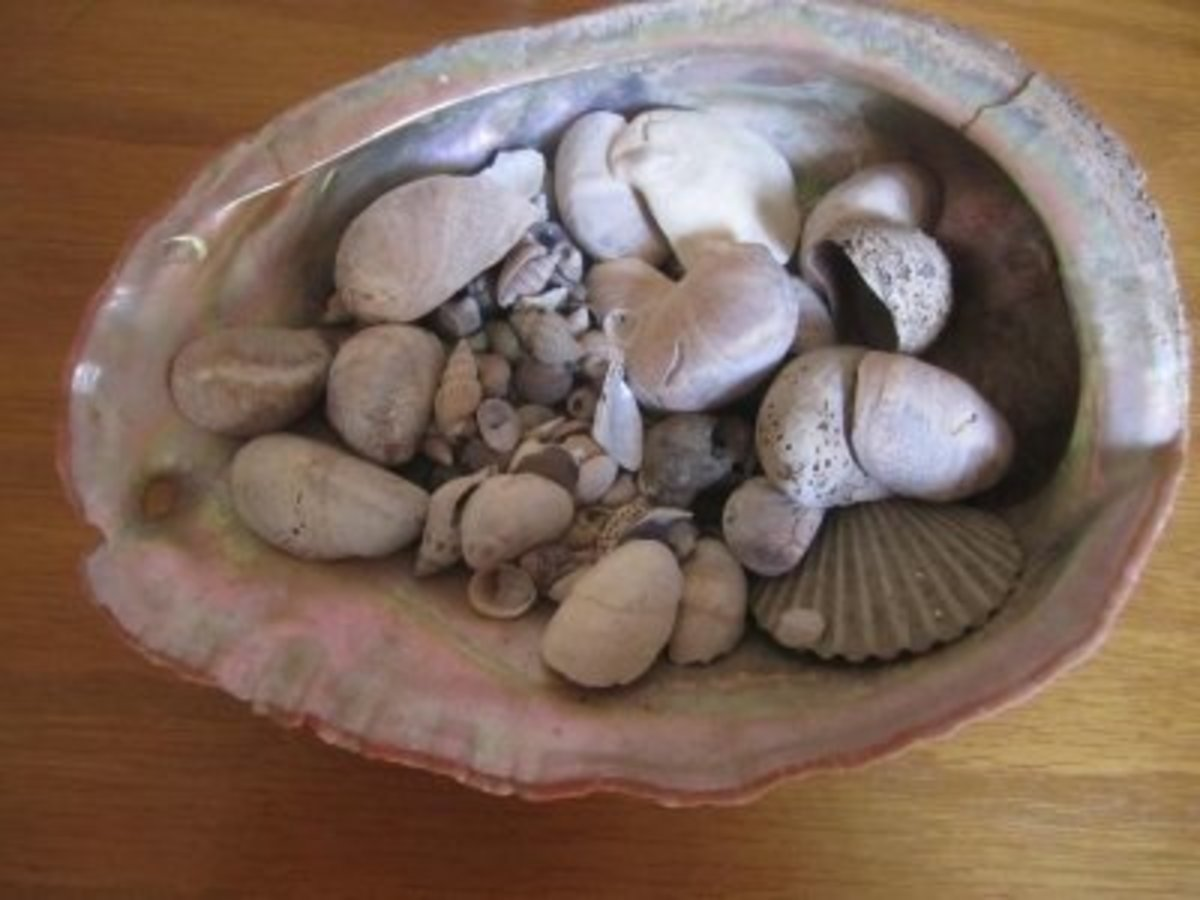 Another shell collection of mine, in a seashell