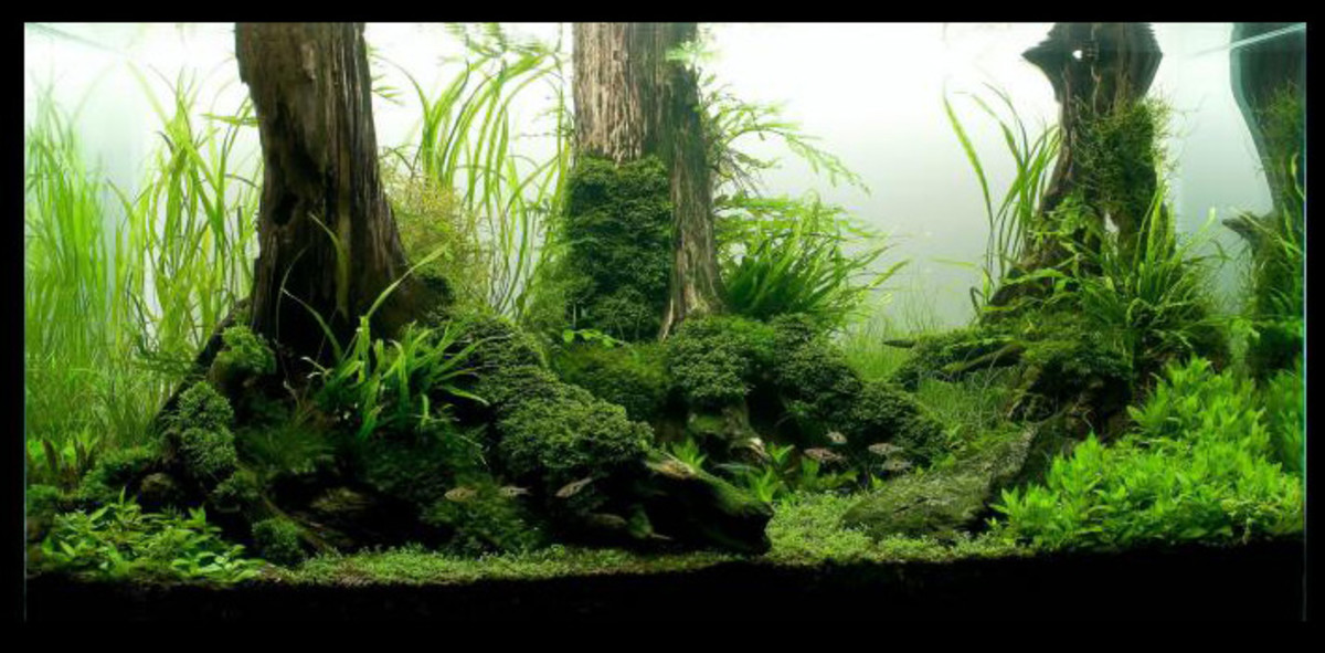 substrate is the foundation of a planted tank