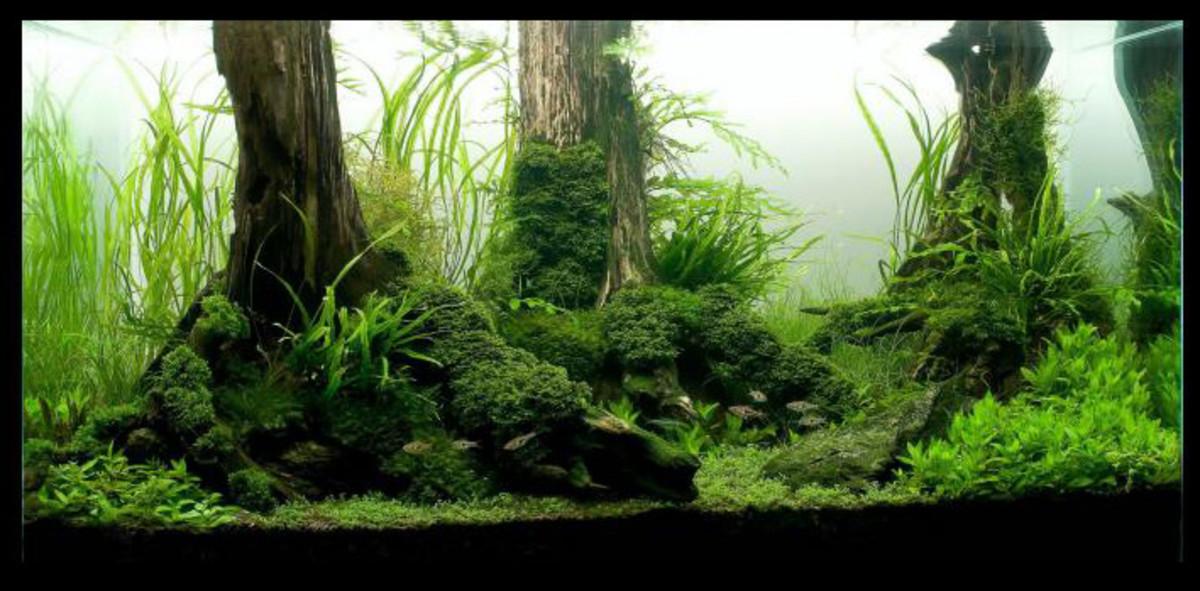 Planted aquarium substrate hubpages for Plante aquarium