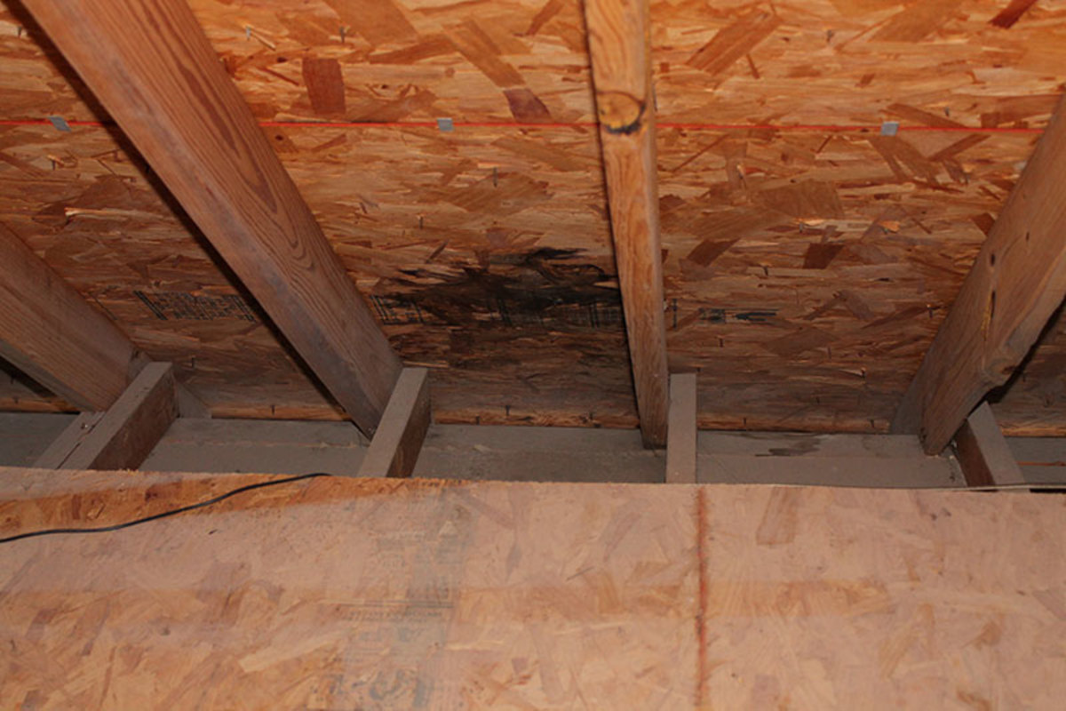 Black mold on the under side of roof deck show a roof leak.