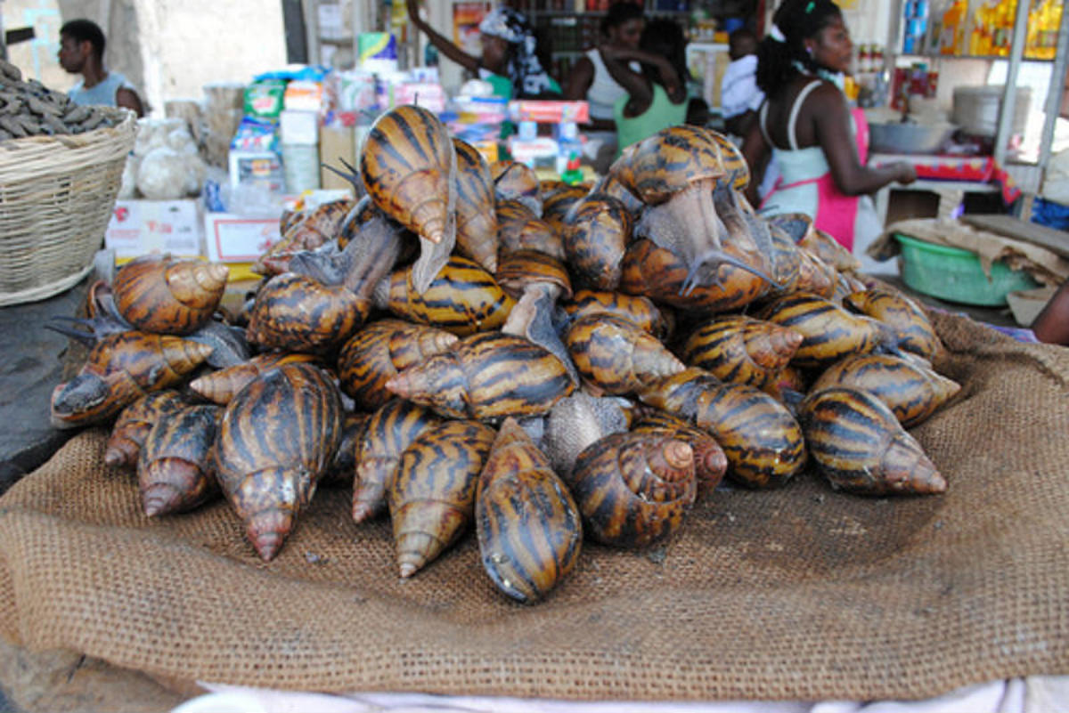 These snails are being sold as dinner in an African market.