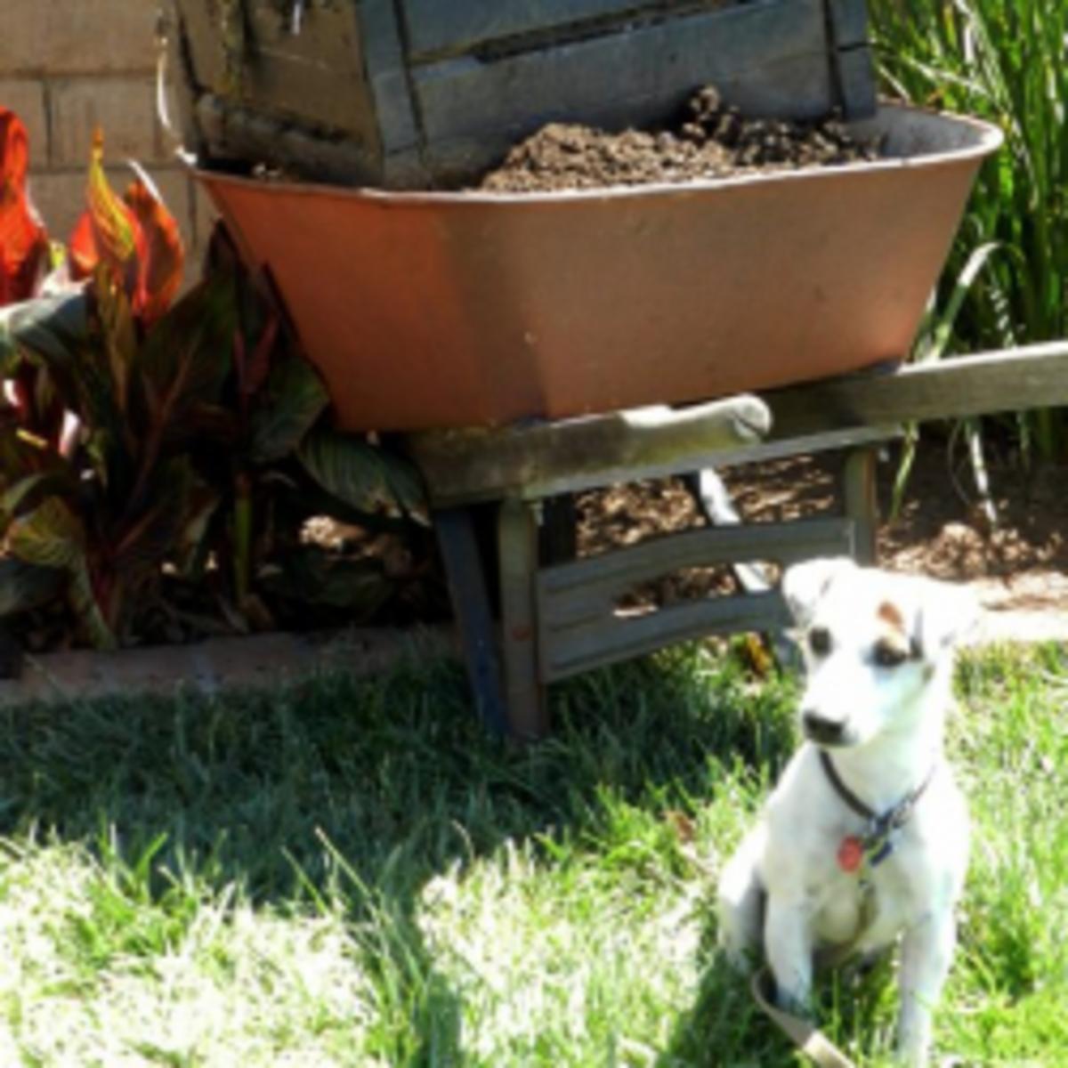 Make A Base for Your Garden Gourmet Compost Bin