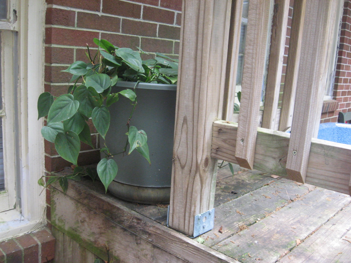 I use outdoor plants in a range of sizes.