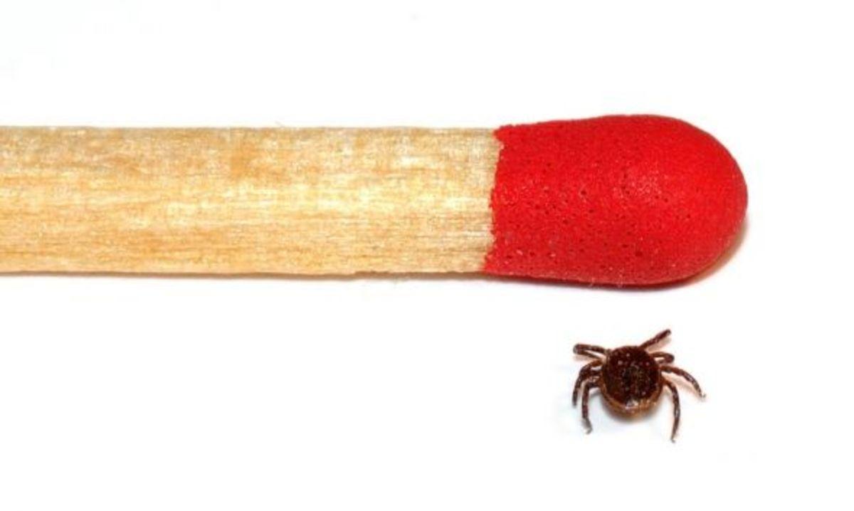 remove-a-tick-2