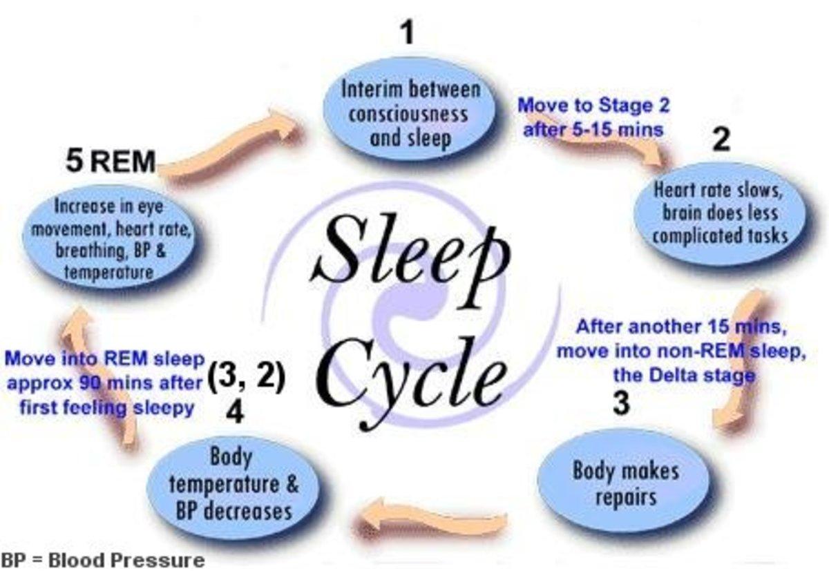 Simplified chart of the sleep cycle